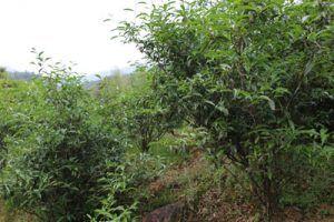Wu Yi - organicky vedená zahrada